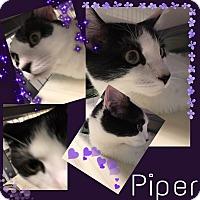 Adopt A Pet :: Piper - Kalamazoo, MI