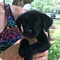 Adopt A Pet :: Gracie - Hohenwald, TN