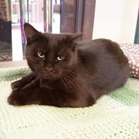 Adopt A Pet :: Beatrice - collingwood, ON