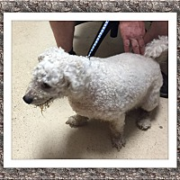 Adopt A Pet :: Goose - TX - Tulsa, OK