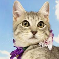 Adopt A Pet :: Coral - Harrisonburg, VA