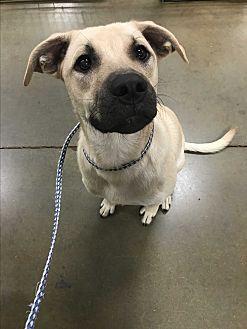 Adopt A Pet :: Macon- NEW LEASH ON LIFE GRAD  - Snow Hill, NC