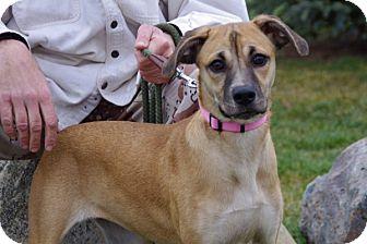 Shepherd (Unknown Type) Mix Puppy for adoption in Elyria, Ohio - Sandy-Prison Dog