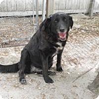 Adopt A Pet :: Blaze - Camden, SC