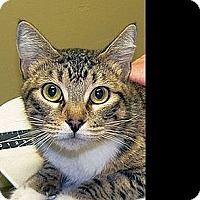 Adopt A Pet :: Emelene - Green Bay, WI