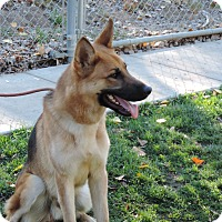 Adopt A Pet :: Odin - Hamilton, MT