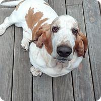 Adopt A Pet :: Hyde - Northport, AL