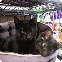 Adopt A Pet :: Charcoal - Hamilton, ON