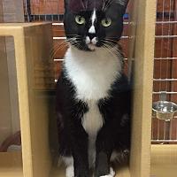 Adopt A Pet :: Sophia - Salisbury, NC
