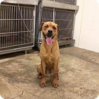 Adopt A Pet :: RUFUS - Upper Sandusky, OH