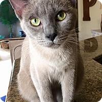 Adopt A Pet :: Tommy - Edmond, OK