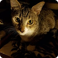 Adopt A Pet :: Jubilee - Walla Walla, WA