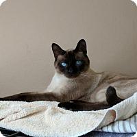Adopt A Pet :: Leo - Santa Monica, CA