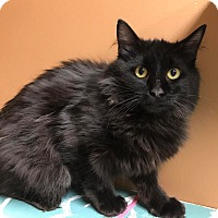 Adopt A Pet :: Inkspot - Maryville, MO
