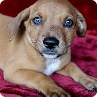 Adopt A Pet :: Hattie - Picayune, MS