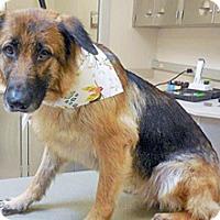 Adopt A Pet :: Libra - Wildomar, CA