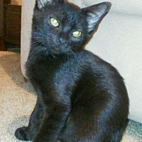 Adopt A Pet :: Jackson - Houston, TX