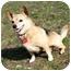Photo 3 - Chihuahua Mix Dog for adoption in Ile-Perrot, Quebec - Irish