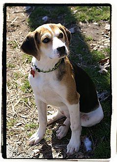 Beagle Mix Dog for adoption in Elmwood Park, New Jersey - Babette