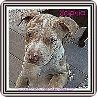 Adopt A Pet :: PUPPIES FOR ADOPTION - Dennis, MA