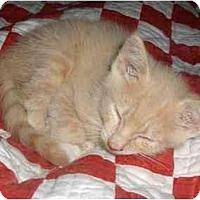 Adopt A Pet :: Mango - Richmond, VA
