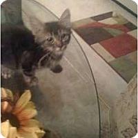 Adopt A Pet :: Grem Jr. - Mobile, AL