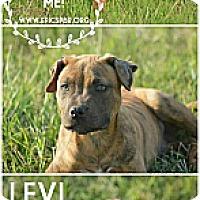 Adopt A Pet :: Levi - Owasso, OK