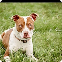 Adopt A Pet :: Mabel - ADOPTED! - Zanesville, OH