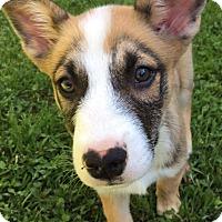 Adopt A Pet :: Egon - West Hartford, CT