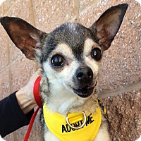 Adopt A Pet :: Zora - Durham, NC