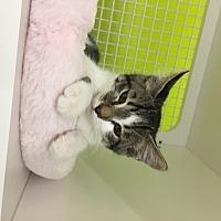Adopt A Pet :: Sophie - San Antonio, TX
