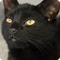 Adopt A Pet :: Candy - Scituate, MA