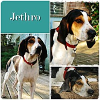 Adopt A Pet :: Jethro-ADOPTED - Ontario, ON