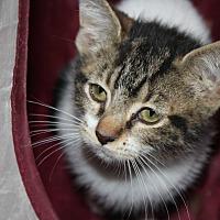 Adopt A Pet :: Tony - Cuero, TX