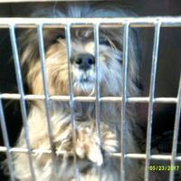 Adopt A Pet :: Angel - Opelousas, LA