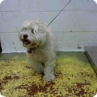 Adopt A Pet :: MS SHAKIRA - Atlanta, GA