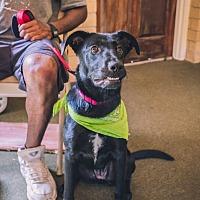 Adopt A Pet :: Nikki - Indian Trail, NC