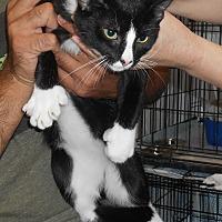 Adopt A Pet :: Bruce - Parkton, NC