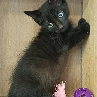 Adopt A Pet :: Eeek - Germantown, MD