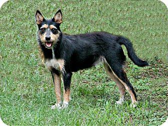Schnauzer (Standard)/Cairn Terrier Mix Dog for adoption in Lufkin, Texas - Meadow