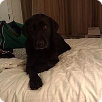 Adopt A Pet :: Millie - Lynnville, TN