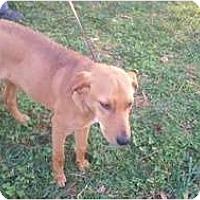 Adopt A Pet :: Nemo-HHS Courtesy post - Fairfax, VA