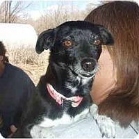 Adopt A Pet :: Herbie The Lovebug - Chimayo, NM