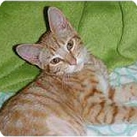 Adopt A Pet :: Margarita - Modesto, CA