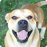 Adopt A Pet :: Al Pawcino ADOPTION PENDING!! - Antioch, IL