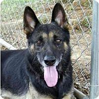 Adopt A Pet :: Barkley - Pike Road, AL