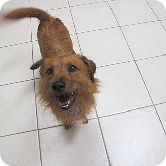 Terrier (Unknown Type, Medium) Mix Dog for adoption in Middletown, New York - Miley