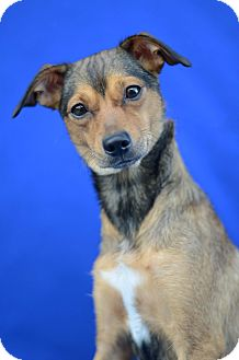Terrier (Unknown Type, Small) Mix Dog for adoption in LAFAYETTE, Louisiana - MARY JANE
