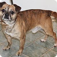 Adopt A Pet :: Dexter - Chapel Hill, NC