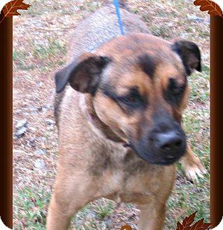Chow Chow/Shepherd (Unknown Type) Mix Dog for adoption in Benton, Arkansas - Pebbles